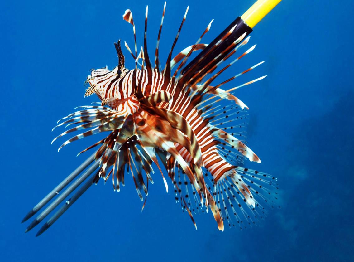 Oriskany Lionfish Trip